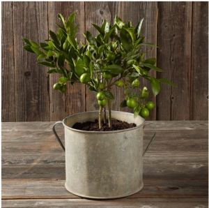 Vintage Galvanized Planter